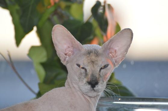 NR 3, Peter Bald katt