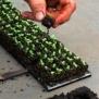 Soilblocker Micro 20