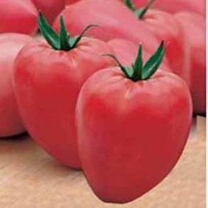 Tomat Cuor di bue