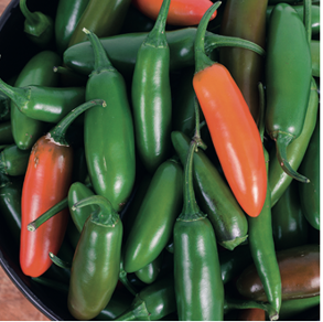 Pepper (Hot) Mild Jalapeno