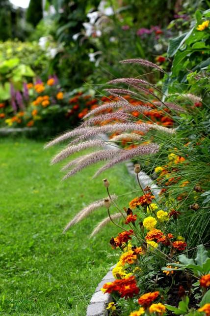 Ammi's vackra trädgård