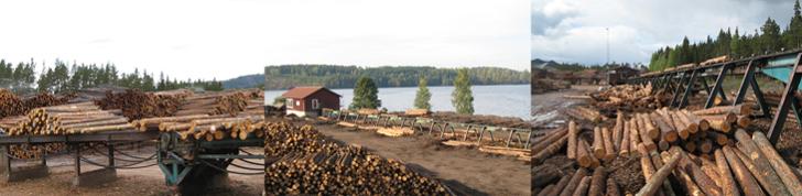Log sorting lines