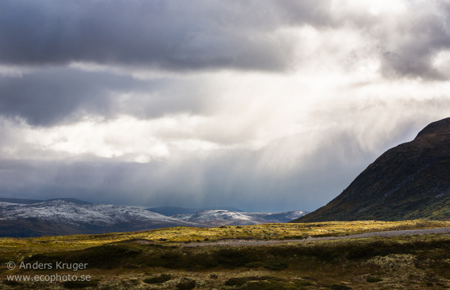Rain and evening sun. Mixed condtions is one of the benefits with mountain life.