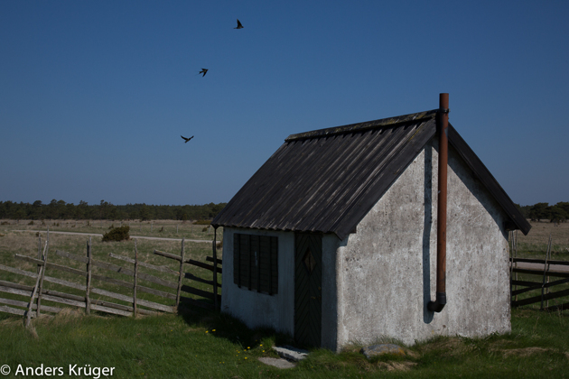 A small lonely cottage and three swallows in the middle of a bird protection area south Eksta coast line  - it was for sale!