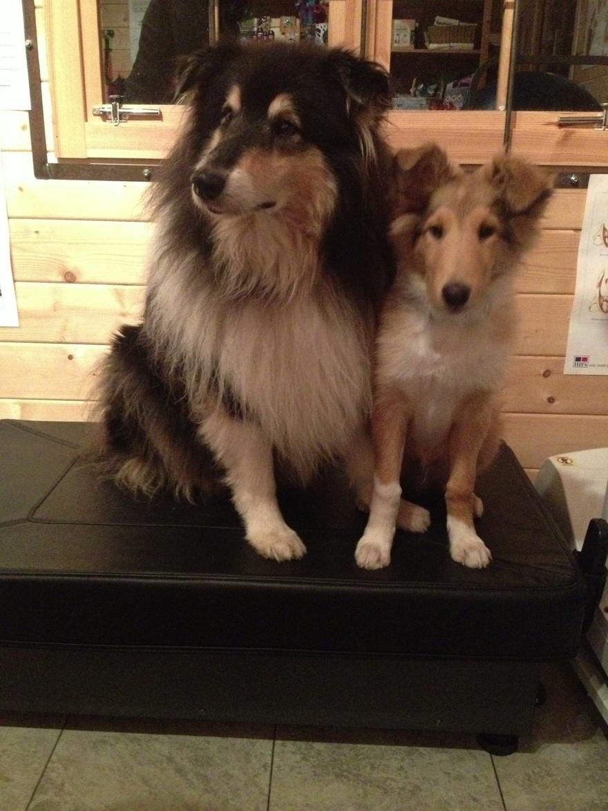 Tassen Hund : Galleri hundkunder rehablitering friskv?rd hund mjuka