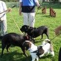 Hunden Frasse och kompisar
