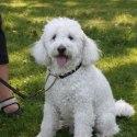 Hunden Ozzy på hundträffen