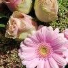 3_Gerbera o rosor