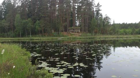 skallinge Gårds Stuga vid sjön ger skön avkoppling, nu blommar näckroserna, vi har både gula och vita i Braxsjön.