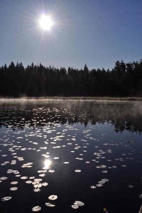 Sol vind och vatten, njut av stillheten vid vår stuga, fiska i sjön, välkomna till Skallinge Gård!