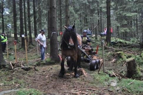 Bästa nordsvensk i skogskörning blev Sigvard Gustavsson och han fick mottaga pris från Föreningen Nordsvenska Hästen.