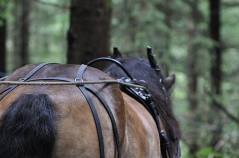 Pälle är en mycket rutinerad skogshäst.  Han har blivit filmstjärna på gamla dagar och medverkar i Astrid Lindgrens Emil reklamfilm.