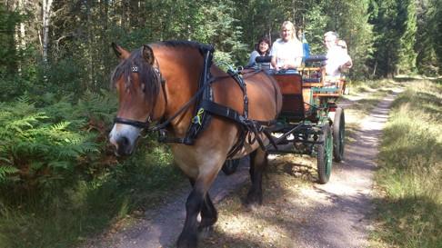 häst och vagn halland halmstad