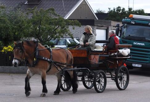 Fira en högtidsdag med en häst och vagnstur.