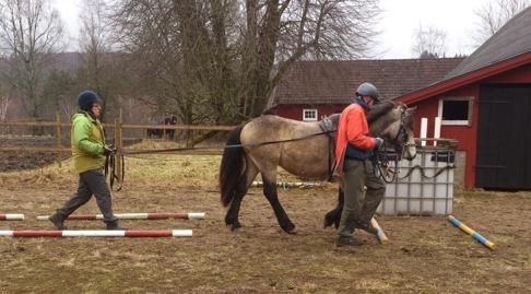 Åsa och Anders med Ante, tvåårig hingst, parera mellan och över bommar är bra träning.