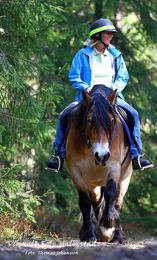 presentkort naturupplevelse ridning häst och vagn Halmstad Halland