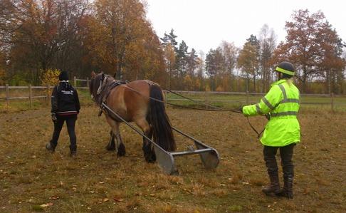 Dolly drar båge lugnt och tryggt i natursköna Simlångsdalen