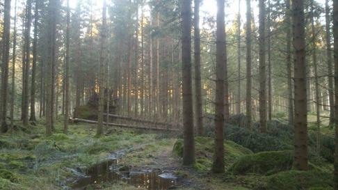 Stormen Gorm drog in i Skallinge Gårds skog och efter inventering kan vi konstatera  ett 60-tal träd fallit.
