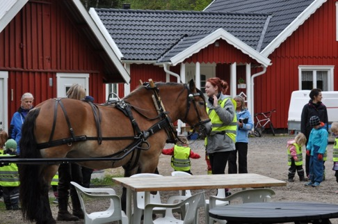 Liiv spänns för vagnen, de vuxna har jättebra koll och är välförberedda på att vara ute med barnen i naturen.