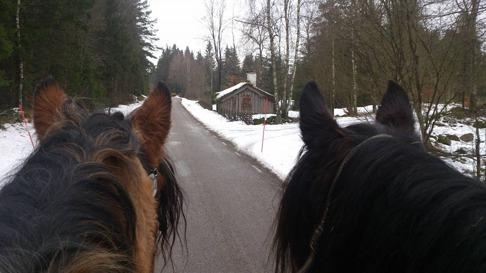 Frida och Liiv spetsar öronen och lyssnar efter traktorn som kör över vägen vid Lurehus