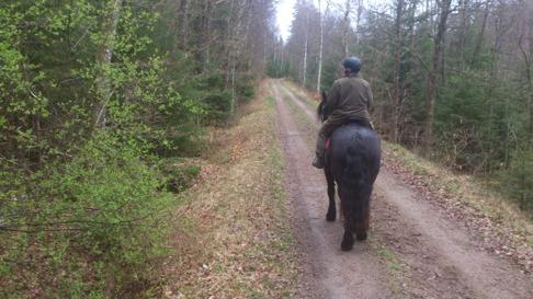 Vi provade meditation på Banvallsleden, bara låta hästarna gå på långa tyglar och själva fokusera inåt. Härlig och  energigivande uppgift!