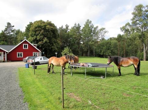 En minirest med häst! Så skönt att bara ligga och slappa, lyssna, lukta, klappa hästarna en stund.