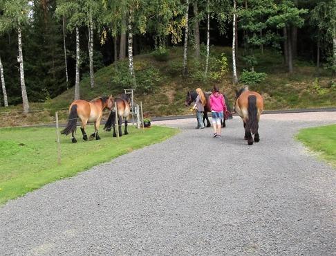 Gästerna var hästvana och tog hand om hästarna både före och efter turen.