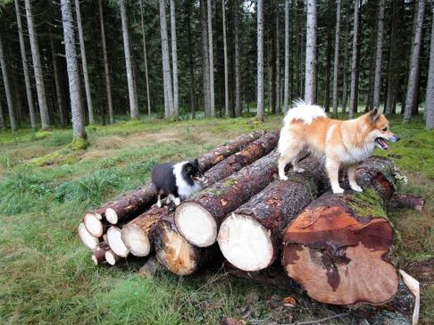 Oscar tar täten, här är det mycket att utforska! Ajvar följer efter upp på stockarna.