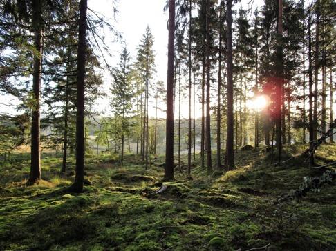 Morgonpromenad i fantastiska natursköna Skallinges Gårds skog i Simlångsdalen