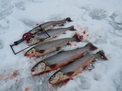 Vintern kom tillbaka i slutet av april. Det bekommer inte rödingen. Här en kvot från Näcksjön.