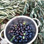 Ny plockade oliver