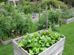 Odling i upphöjda odlingsbäddar 2013.