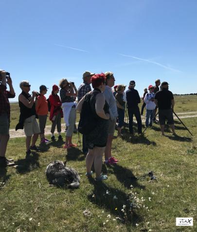 Vaktuppdrag på Blå Jungfruns Nationalpark (sm) är ett årligt inslag i Flax verksamhet