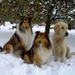 tre hundar
