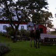 Besök av skogens konung på Stakaberg B&B i Holm nära Halmstad