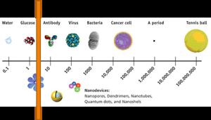 Vare sig tennisbollar, bakterier, antikroppar eller nanopartiklar tar sig igenom den välfungerade barriär som huden utgör.