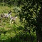 Dag 14 - Mitt ute i skogen mötte jag många renar som sprang iväg så fort de fick syn på mig