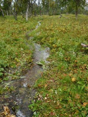 Dag 35 - Regnet kom tillbaka och stigarna blev till bäckar