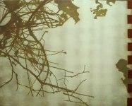 Gren,olja,96x120 cm