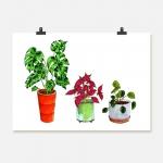 Krukväxter tre i färg