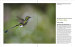 A 12 page article about hummingbirds in the nature photography magazine for Scandinavia.