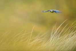 2014 Nordic Nature Photo Contest: Category birds - Highly commended