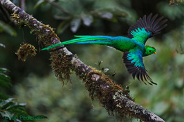 2015 ASFERICO International Nature Photography Competition : Category birds - Winner