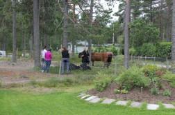 Ställ din häst i våra hagar medan du äter på restaurangen.