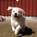 Glada härliga Bella :)