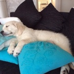 Jack myser i soffan