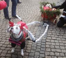 Doris & Max lussar för sina hundvänner!