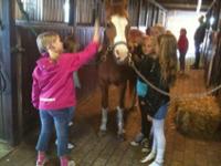 Sköt om en häst på kalas på Pannkaksladan