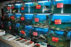Färsk fisk på restaurangen...