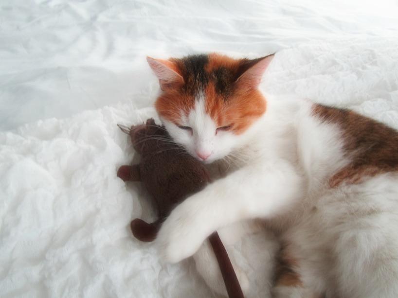 Olivia med mjukisråtta